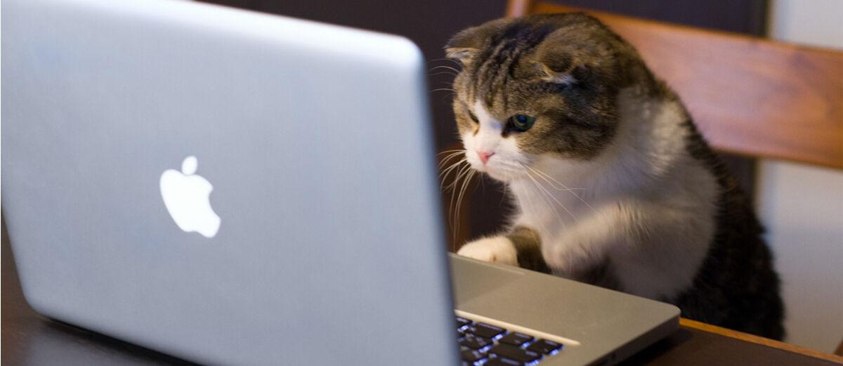 3 Cara Hemat Kuota Internet di PC Hingga 40%