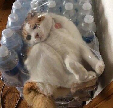 Kucing Cf3cb