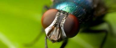 Cara Mengusir Lalat dengan Aplikasi Android