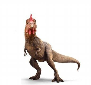 Ayam Adalah Keturunan T Rex Dc4b3