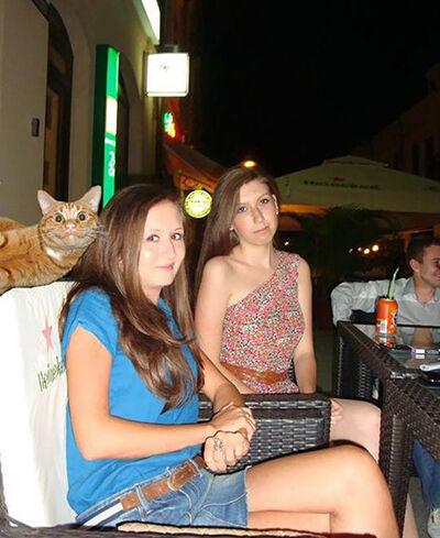 Photobomb Kucing 9
