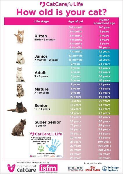 Usia Kucing 5 Ee551