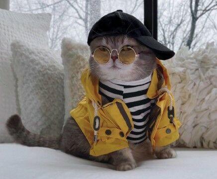 Nama Kucing Lucu Laki Laki C171c