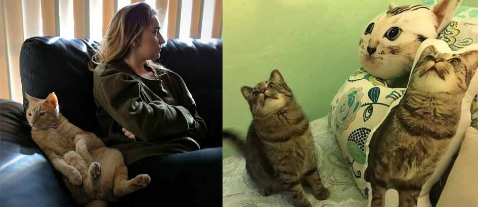 10+ Momen Lucu Kucing Ini Diunggah ke Snapchat, No. 12 Epic Banget!
