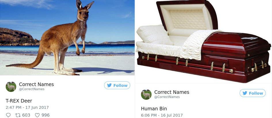 Ngakak! Akun Twitter Ini Ungkap 20 'Nama Asli' Benda di Dunia