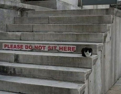 Kucing Lucu Bikin Ngakak 2ca4c