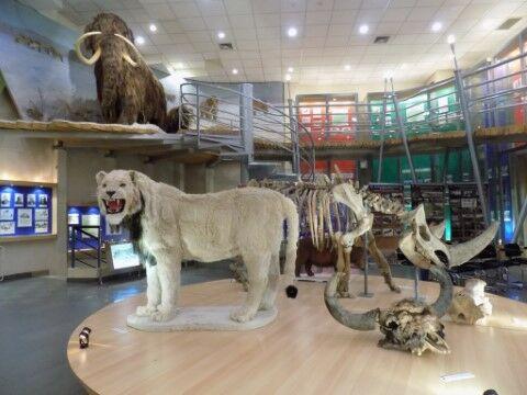 Museum Hewan Purba Di Republik Sakha Df2ac