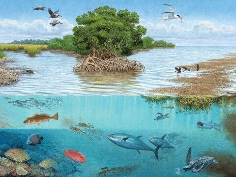 Ekosistem Laut Adalah 571cf