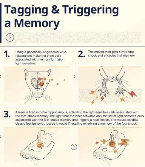 Teknologi Manipulasi Ingatan Manusia 1 9b3d5