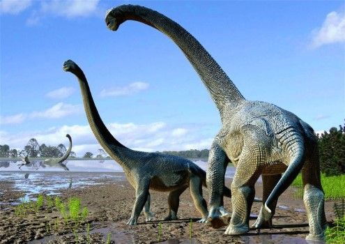 Fosil Dinosaurus Raksasa 96d27