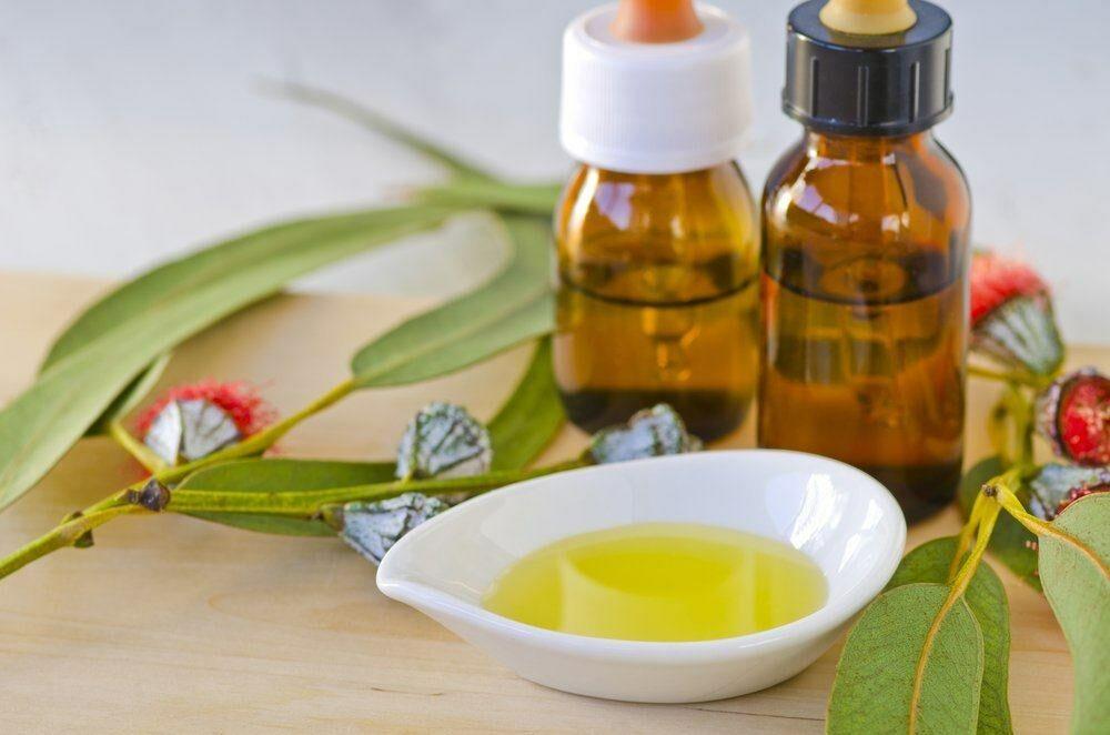 manfaat-minyak-kayu-putih