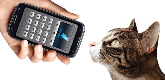 aplikasi tentang kucing - JalanTikus com
