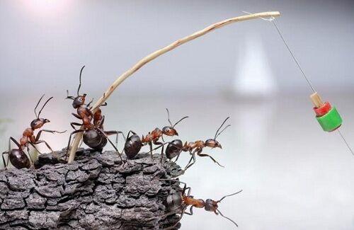 Semut Mengelilingi Iphone 5