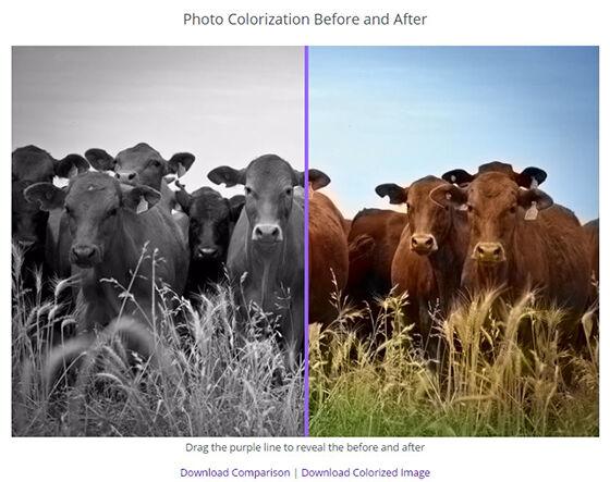 Cara Mudah Untuk Membuat Foto Hitam Putih Jadi Berwarna Jalantikuscom