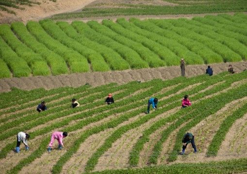 Kebiasaan Orang Korea Utara A9b05