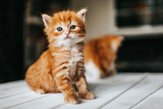 Nama Kucing Kembar 57f6d