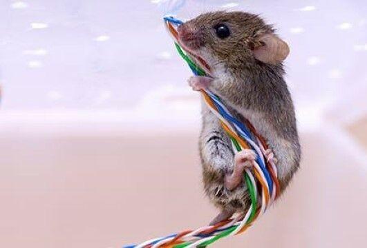 Ada Tikus Makan Kabel 324ca