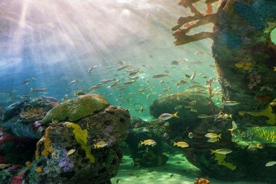 Ekosistem Terumbu Karang 9238f