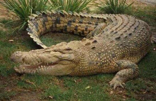 Dinosaurus Di Indonesia 16076