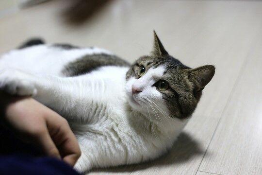 Nama Kucing Lucu Dan Artinya Eaa37