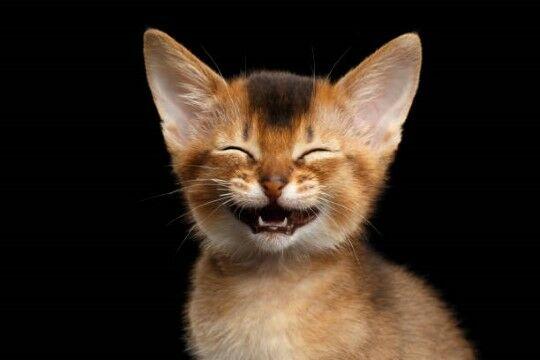 Nama Kucing Lucu Ngakak 87a43