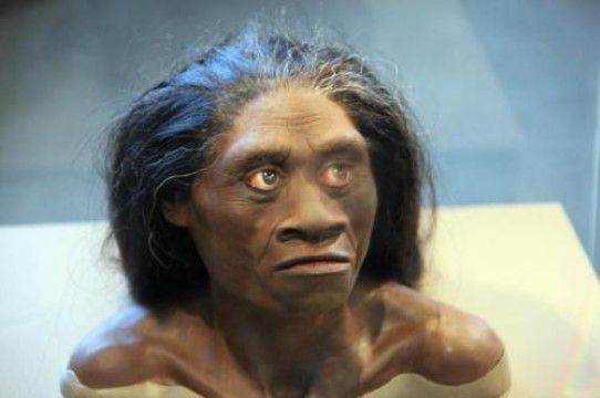 Homo Floresiensis C5143