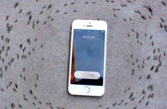 Semut Mengelilingi Iphone