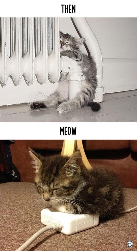 Begini Teknologi Mengubah Kehidupan Kucing 3