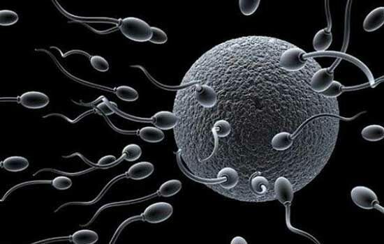 Bahaya Wifi Pada Sperma