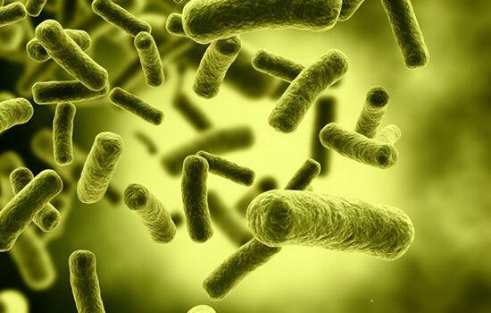 Bakteri Di Handphone C41bd
