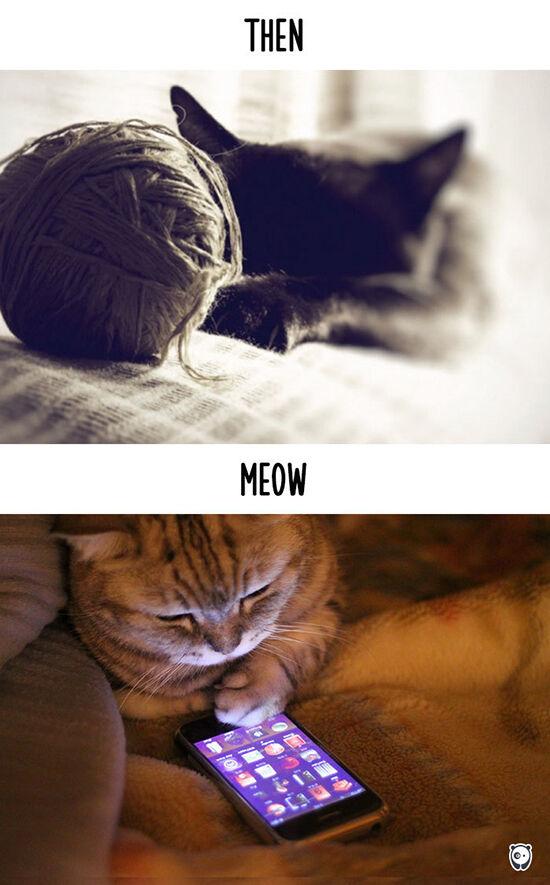 Begini Teknologi Mengubah Kehidupan Kucing 10