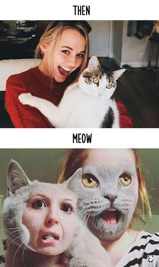Begini Teknologi Mengubah Kehidupan Kucing 13