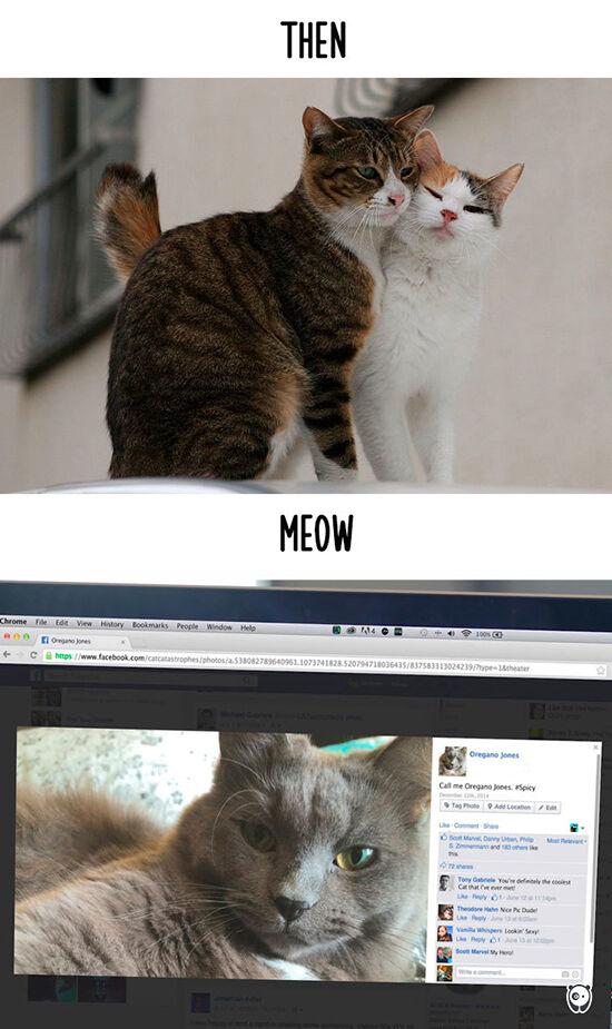 Begini Teknologi Mengubah Kehidupan Kucing 9