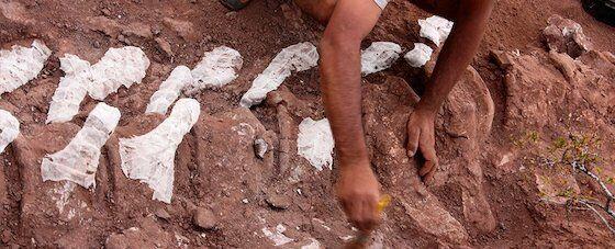 Fosil Dinosaurus Di Indonesia Ac1f4