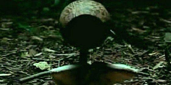 Ritual Pemanggil Hantu 1 B3e09