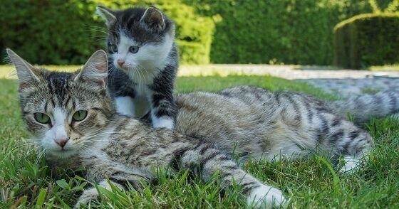 Usia Kucing 1 Ea79e