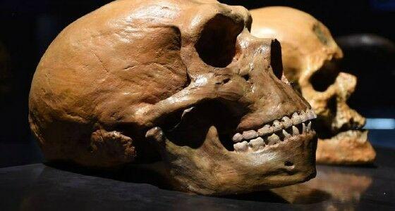 Neanderthal 38441