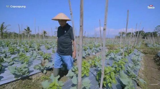 Suharto Di Tengah Lahan Pertanian Miliknya 43d13 1 0ee17