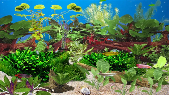 Wallpaper Aquarium Bergerak Windows 7 2 0f780