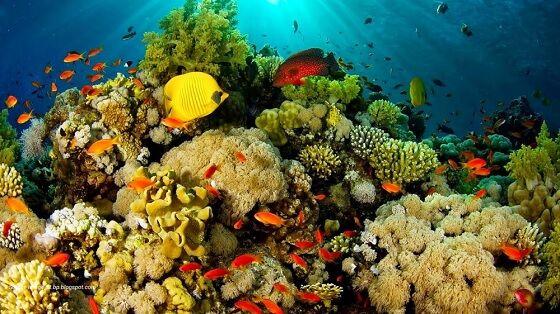 Tempat Wisata Indonesia Yang Mendunia 7 5ca23