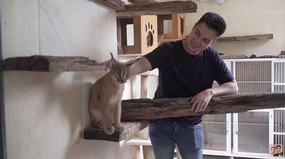 Rumah Kucing Baim Wong 0a4bd