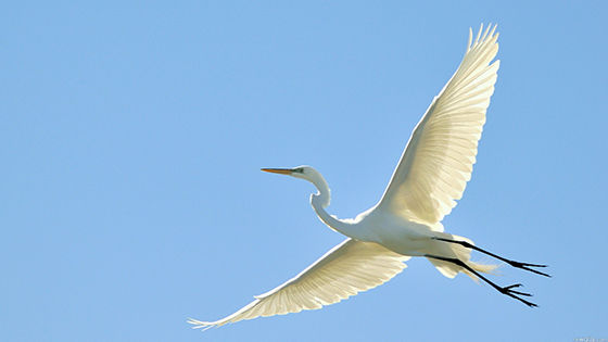 7 Foto Burung