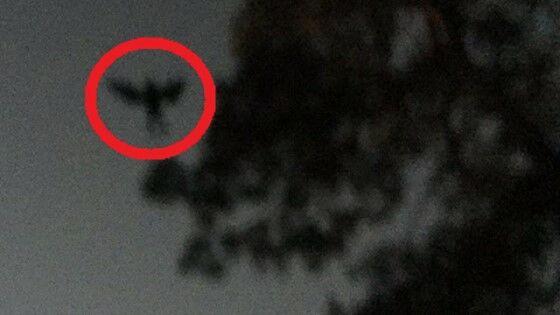 Monster Mengerikan Tertangkap Kamera 3 F4114