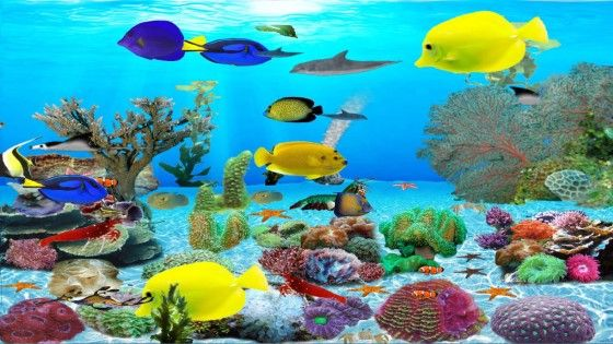 Wallpaper Aquarium Bergerak Windows 7 1 D0e78