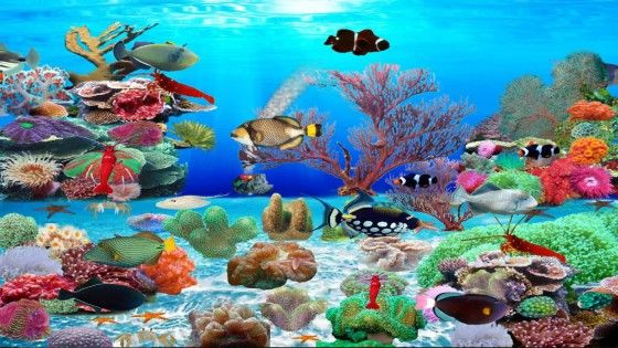 Wallpaper Aquarium Bergerak Windows 7 2 48af0