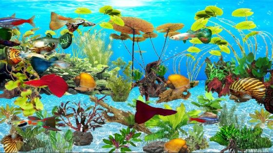 Wallpaper Aquarium Bergerak Windows 7 3 389fa