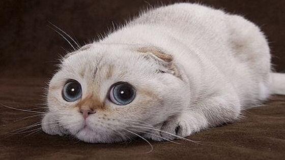 Aplikasi Tentang Kucing 1 29e2c