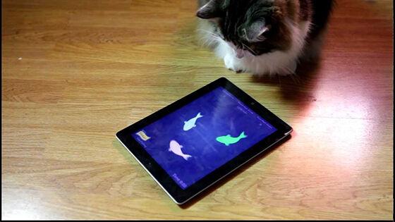 Aplikasi Tentang Kucing 6 0465f