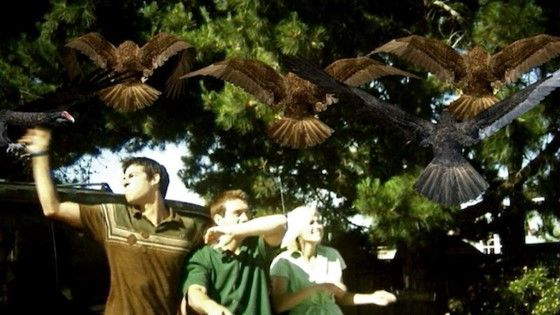Film Gagal Birdemic Custom Fe67a
