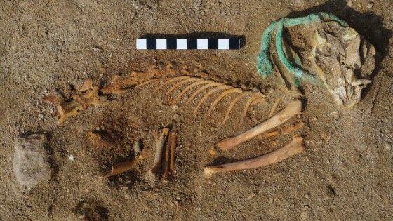 Kuburan Hewan Peliharaan Di Mesir D334a